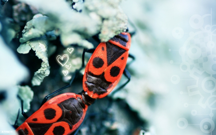 insecte fond écran wallpaper