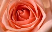 fond écran 29- fleur