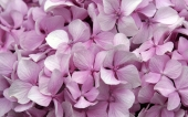 fond écran 58- fleur