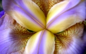 fond écran 59- fleur