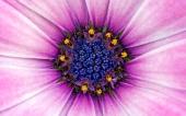 miniature 60- fleur