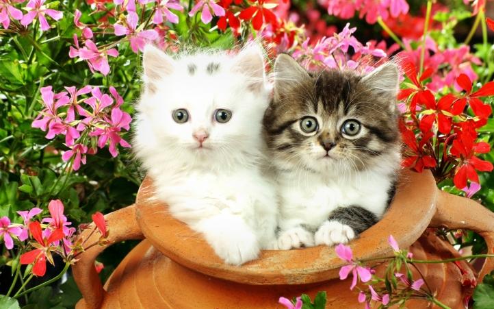 fond d 39 cran gratuit 11 deux chaton fonds d 39 cran animaux gratuits 11 deux chaton. Black Bedroom Furniture Sets. Home Design Ideas