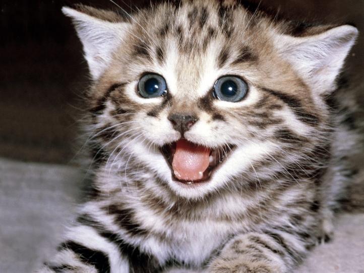 chats chatons fond cran wallpaper
