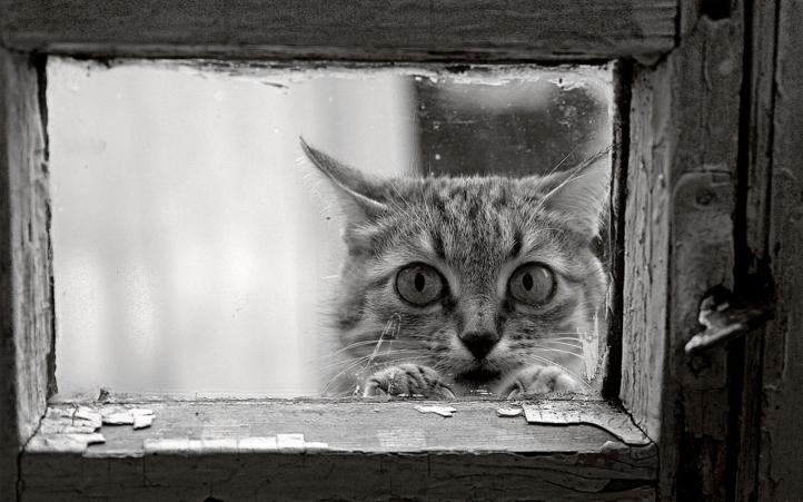 Funny Kitty fond écran wallpaper