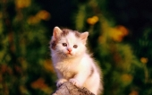 miniature 06-chaton