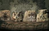 fond écran 12-les chaton