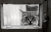 fond écran Funny Kitty