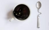miniature Le Pti Noir