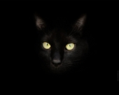 miniature Sirius Black le Chat Noir