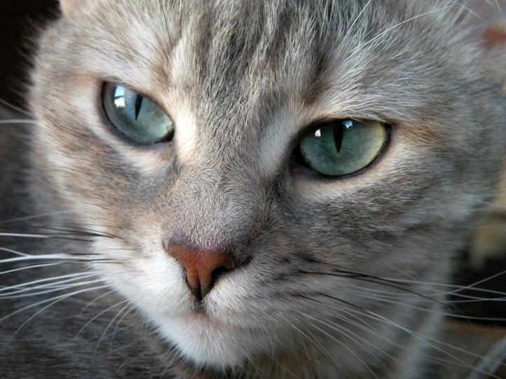 Fond d 39 cran gratuit petit chat fonds d 39 cran animaux - Image de petit chat ...
