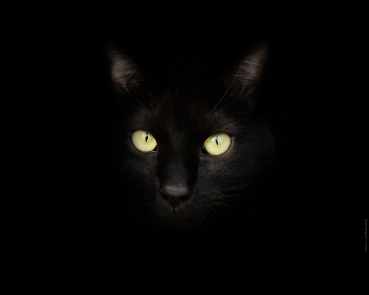 http://www.weesk.com/wallpaper/animaux/chats-chatons/sirius-black-le-chat-noir/sirius-black-le-chat-noir-720px.jpg