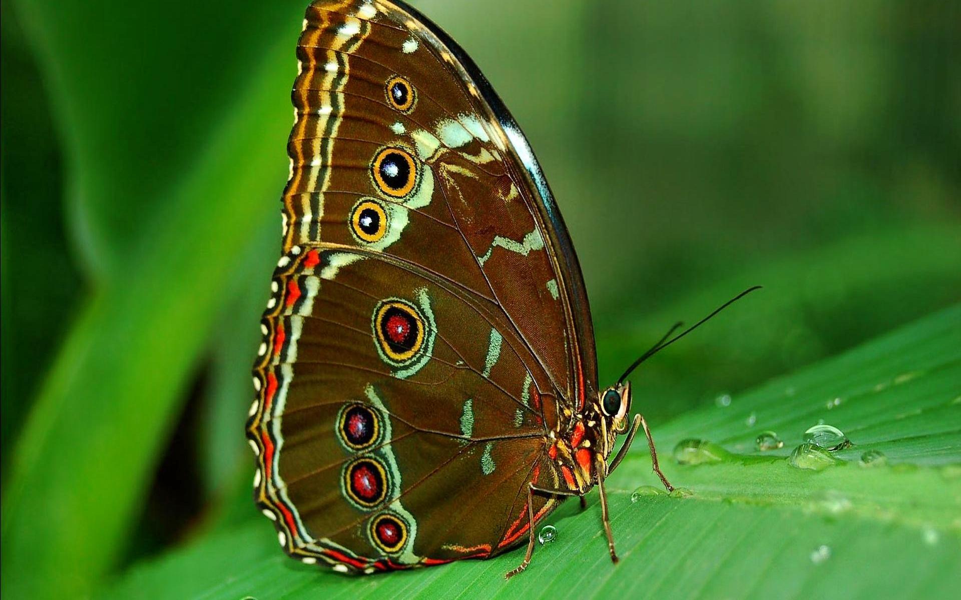 fond d 39 cran 31 papillon en cours de vote 31 papillon. Black Bedroom Furniture Sets. Home Design Ideas