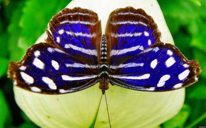 fond d 39 cran gratuit 45 papillon fonds d 39 cran animaux gratuits 45 papillon. Black Bedroom Furniture Sets. Home Design Ideas