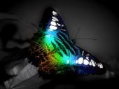 fond écran Butterfly