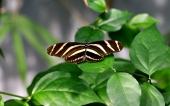 fond écran papillons
