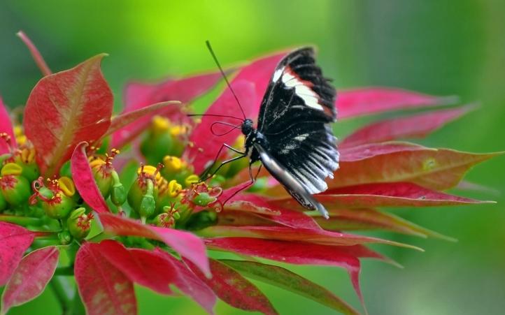 fond d 39 cran gratuit papillons fonds d 39 cran animaux gratuits papillons 501. Black Bedroom Furniture Sets. Home Design Ideas