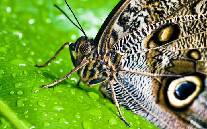 papillons fond écran wallpaper