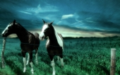 miniature chevaux