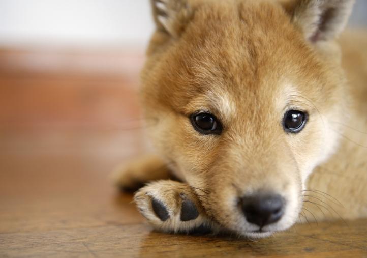 Image de chien mignon gratuit image de - Image des mignon ...
