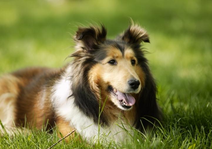 Fond d 39 cran gratuit chien mignon fonds d 39 cran animaux for Fond ecran mignon