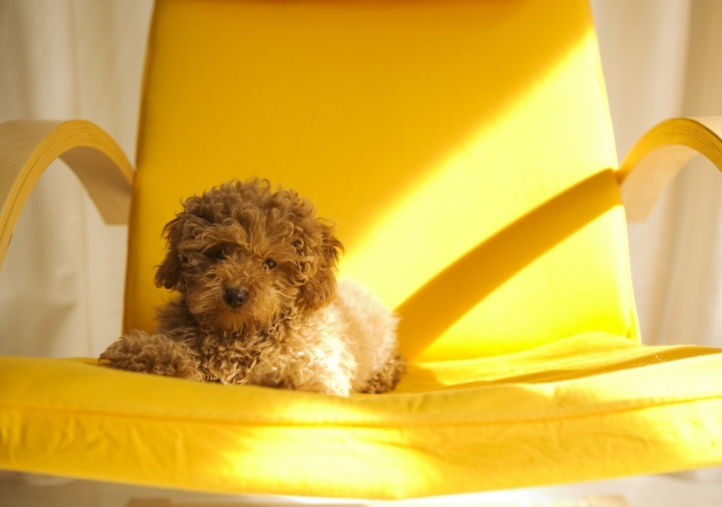 fond d 39 cran gratuit chien mignon fonds d 39 cran animaux gratuits chien mignon 610. Black Bedroom Furniture Sets. Home Design Ideas