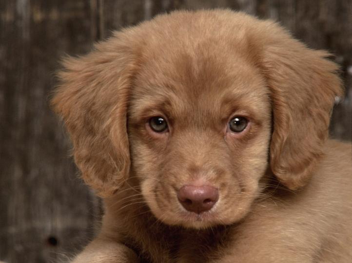 Fond d 39 cran gratuit chiens chiots fonds d 39 cran for Fond ecran chiot