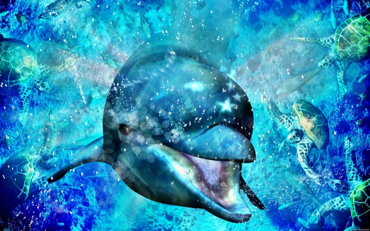 fond d 233 cran gratuit 01 dauphin fonds d 233 cran animaux gratuits 01 dauphin