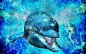 fond écran 01-dauphin