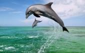 02-dauphin