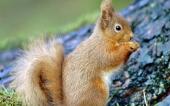 fond écran 01-ecureuil