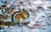 fond écran 04-ecureuil