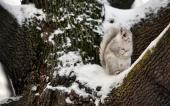 fond écran 05-ecureuil
