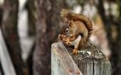 fond écran 06-ecureuil