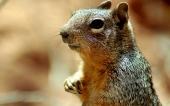 fond écran 07-ecureuil