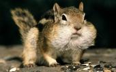 fond écran 08-ecureuil