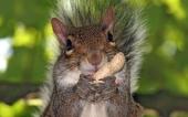 fond écran 09-ecureuil