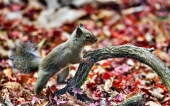 fond écran 11-ecureuil