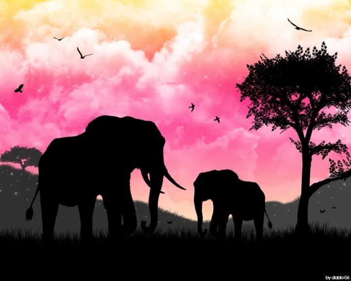 Fond D Ecran Gratuit Afrique Fonds D Ecran Animaux Gratuits Afrique