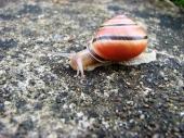 fond écran escargot