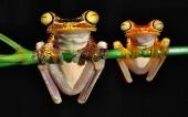 fond écran 08-grenouille