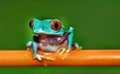 fond écran 09-grenouille