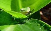 fond écran 11-grenouille