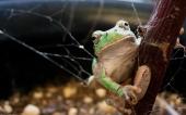 fond écran grenouilles