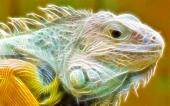 miniature Iguane Fractal