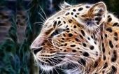 fond écran 03-leopard