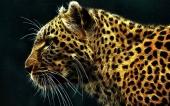 fond écran léopard