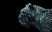 fond écran léopards
