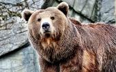 fond écran ours