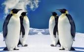 fond écran 03-pingouin