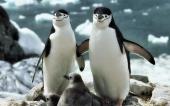 fond écran 06-pingouin